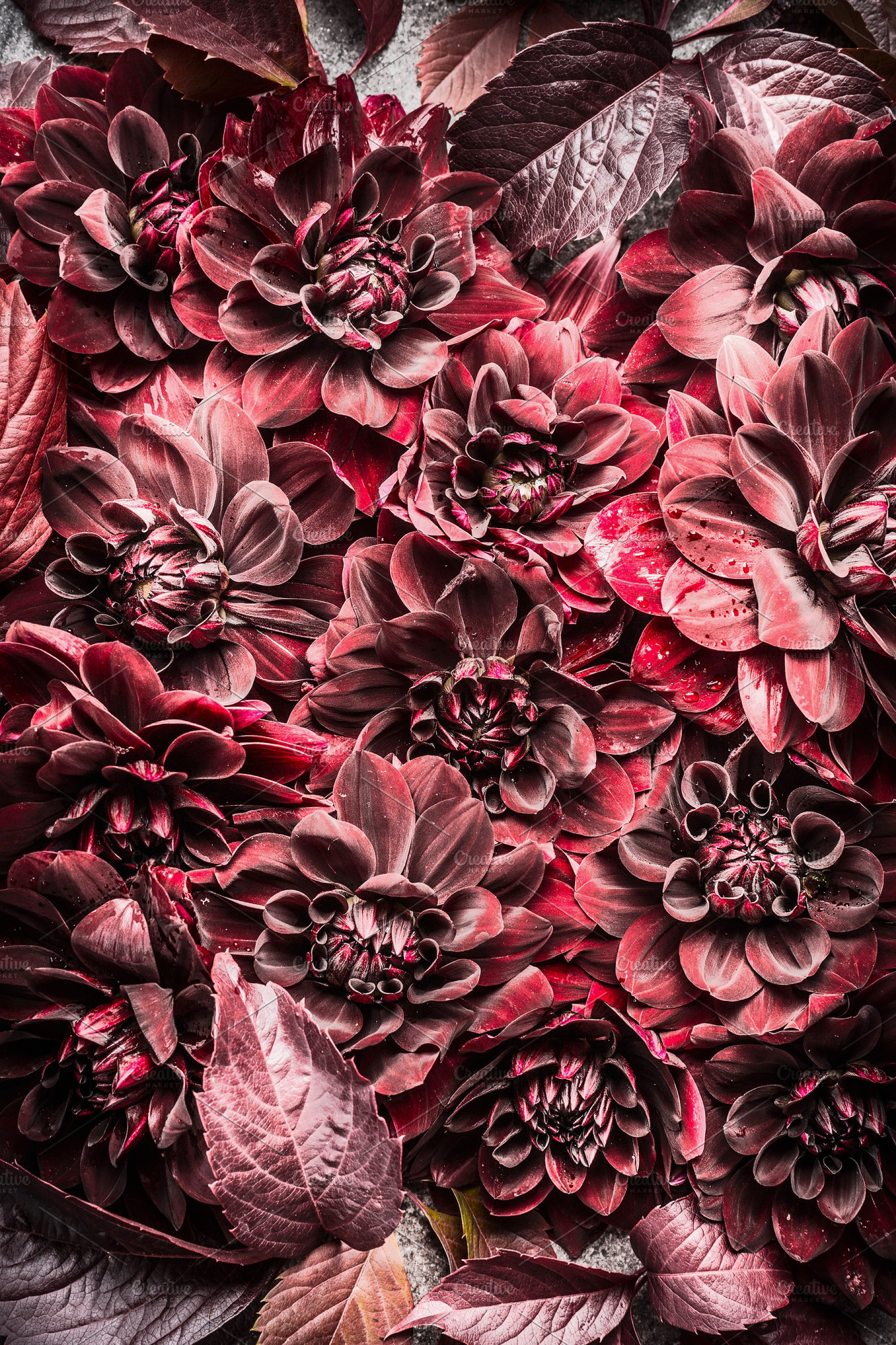Burgundy Leaves And Flowers High Quality Nature Stock Photos