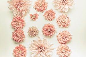 Pink pastel flowers flat lay