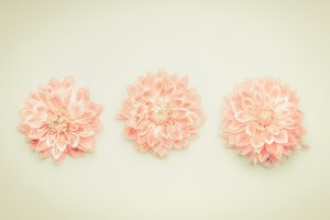 Pink pastel flowers on beige