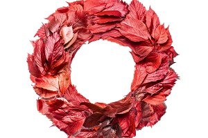 Autumn red leaves wreath