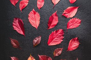 Red autumn leaves flat lay