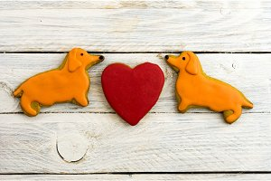 Yellow dogs and a red heart. Dachshund dog.