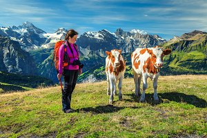 Hiker woman and young calfs