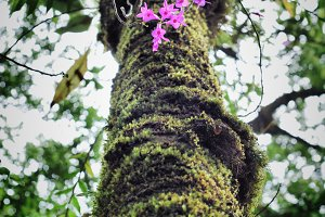 forest orchids