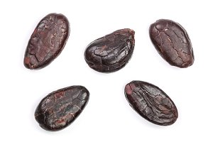 cocoa bean isolated on white background macro top view