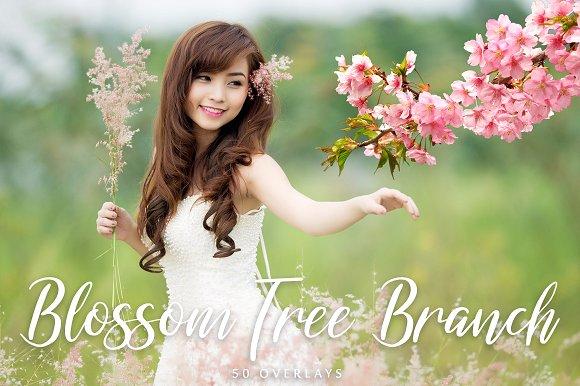 50 Blossom Tree Branch Overlays