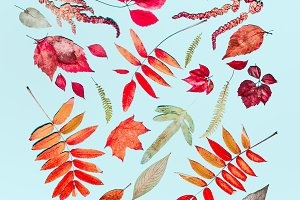 Various autumn leaves flat lay