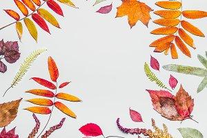Autumn leaves frame on blue