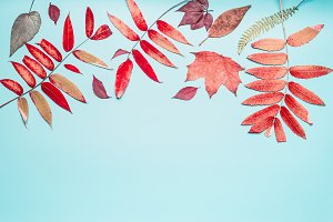 Red autumn leaves on turquoise