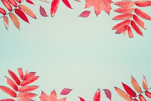 Autumn leaves frame or layout