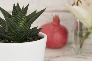 Succulent Aloe in a White Pot