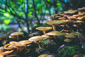 Group of beautiful mushrooms in the moss on a log with forest trees in background