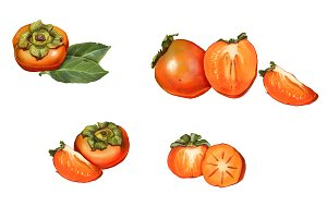 Persimmon Pencil Drawing Isolated
