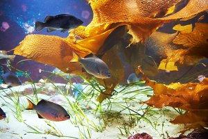 Tropical fish near coral reef