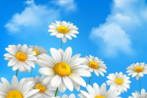 Chamomile flowers background