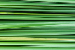 Backdrop of the grass leaves.