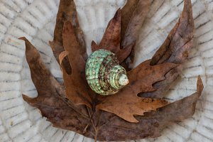 Seashell and autumn leaves