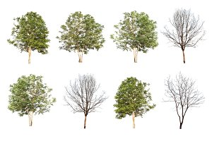 set of eight trees and dead trees