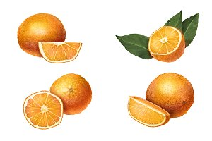 Oranges Illustration Isolated