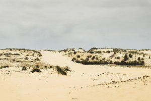 Sand dunes of Doñana.