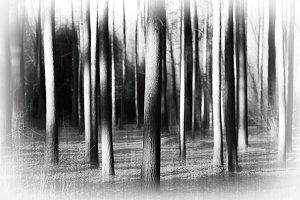 Vertical wild forest tree trunks