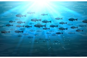 Shoal of sea fish in ocean
