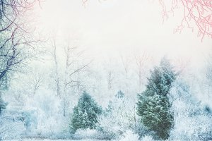 Snowy Winter forest landscape