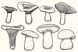 Set of mushroom illustration