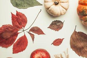 Creative autumn layout with pumpkin