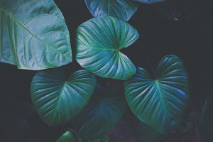 Green fashionable nature tropical leaves texture for background