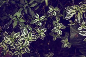 Green creative fashionable nature leaves texture for background