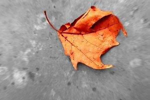 Autumn leaf background photo