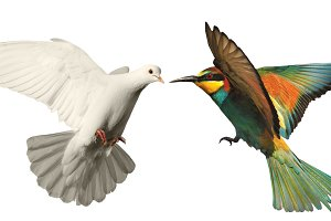 white dove and colored bird on a white background