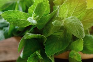Fresh mint leaves on wooden background with copyspace and sunlights