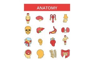 Anatomy illustration, thin line icons, linear flat signs, vector symbols, outline pictograms set, editable strokes