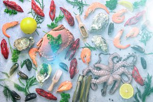 Seafood background - fresh mussels, molluscs, oysters, octopus, razor shells, shrimps, crab, crawfish, crayfish, seaweed, lemon, spices. Banner with copyspace