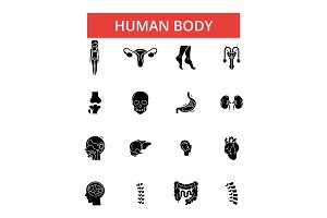 Human body illustration, thin line icons, linear flat signs, vector symbols, outline pictograms set, editable strokes