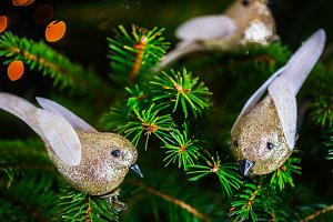 Christmas Robin Bird on the Xmas Tree