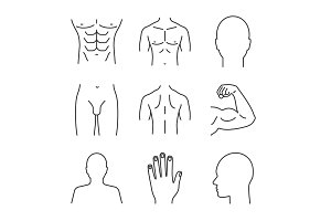 Male body parts linear icons set