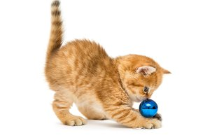 Kittens playing with a Christmas toy