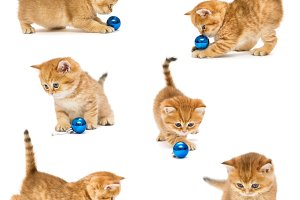 Kittens playing with a  toy