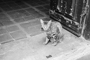 Cat in a House