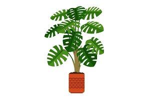 Monstera houseplant in ceramic pot