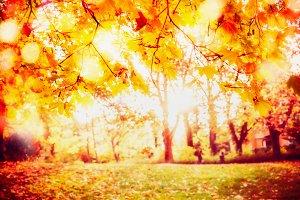 Gold foliage with sunbeam