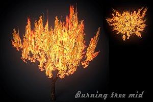 Burning tree mid