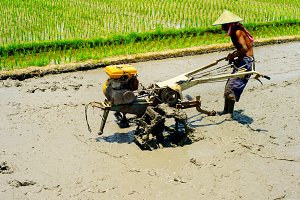man working in a rice field
