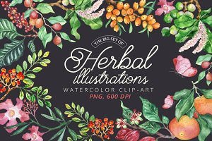 Fruit Herbal - clip-art