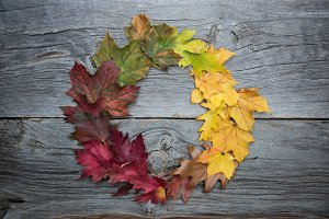 Autumn wreath. Colorful leaves