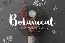 40+ Botanical Hand Drawn Elements