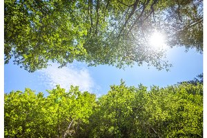 Green fresh tree leaves against the blue sky